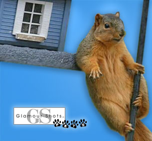 Glamour Squirrel